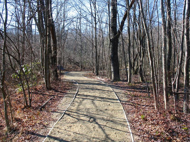 The Open Woods...