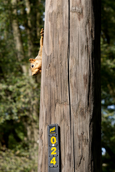 Squirrel climbing