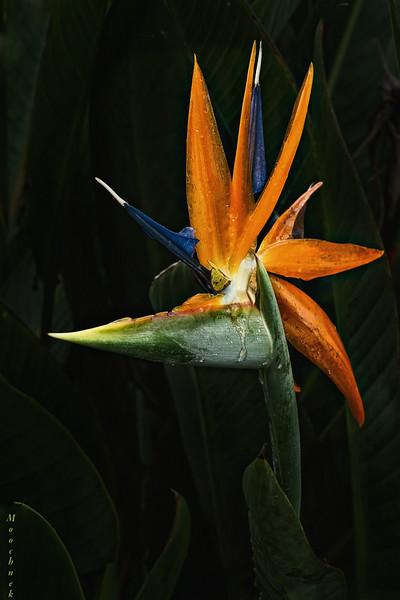 Illuminated Bird