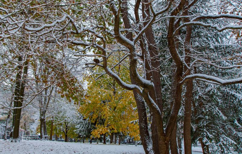 Snow-Wingfoot-Park-treecolor2.jpg