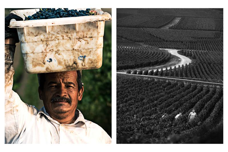 Diptych Wine 2.jpg