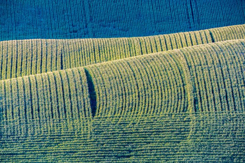 Wheat Fileds