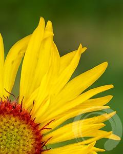 2021 Wildflowers