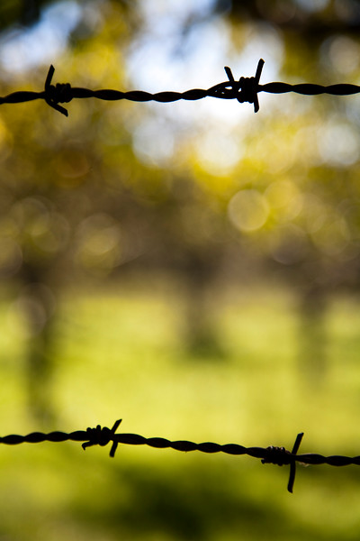Barbed wire, town of Casta–o del Robledo, province of Huelva, Andalusia, Spain