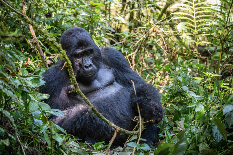 Uganda_T_Gor-347.jpg