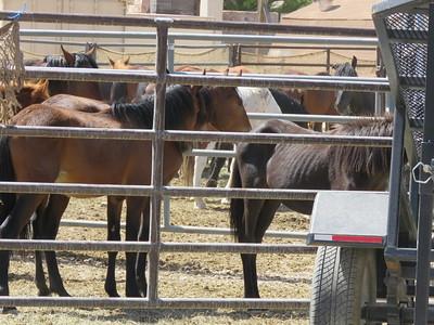 Cold Creek Horses