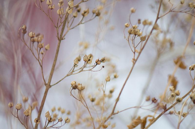 weeds_1.jpg