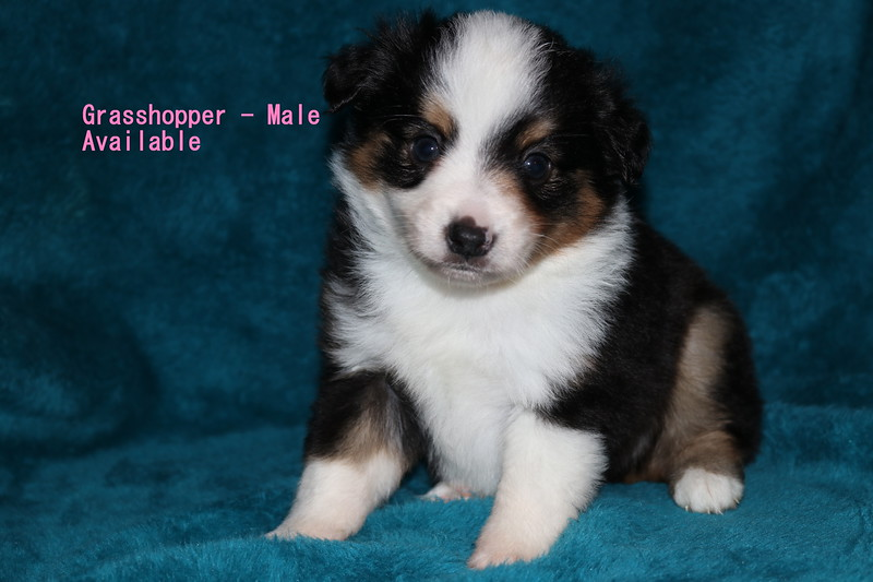 Grasshopper is reserved as of 9/26