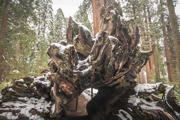 Forest Master Slideshow