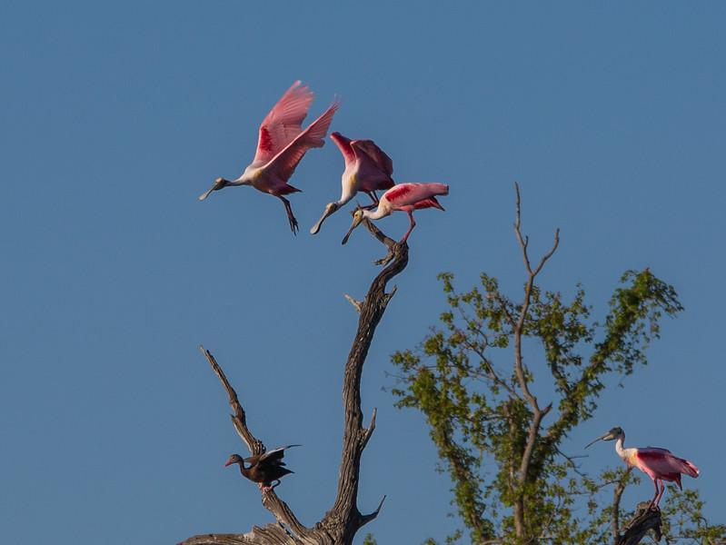 Brazos Bend State Park-15-49.jpg