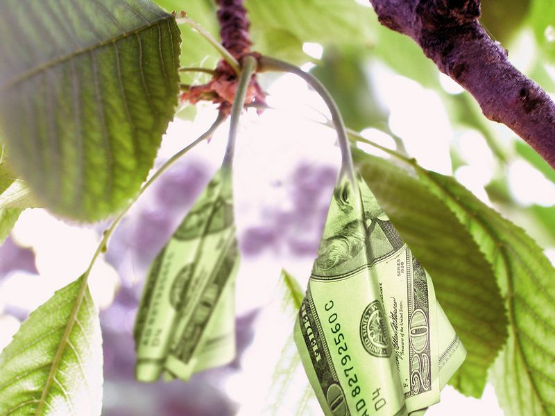 New $20 bills - Proof that money does grow on trees.