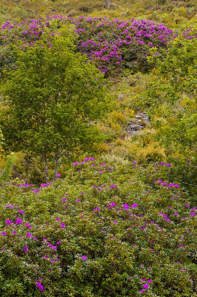 Vouzela-PR2 - Um Olhar sobre o Mundo Rural - 17-05-2008 - 7481.jpg