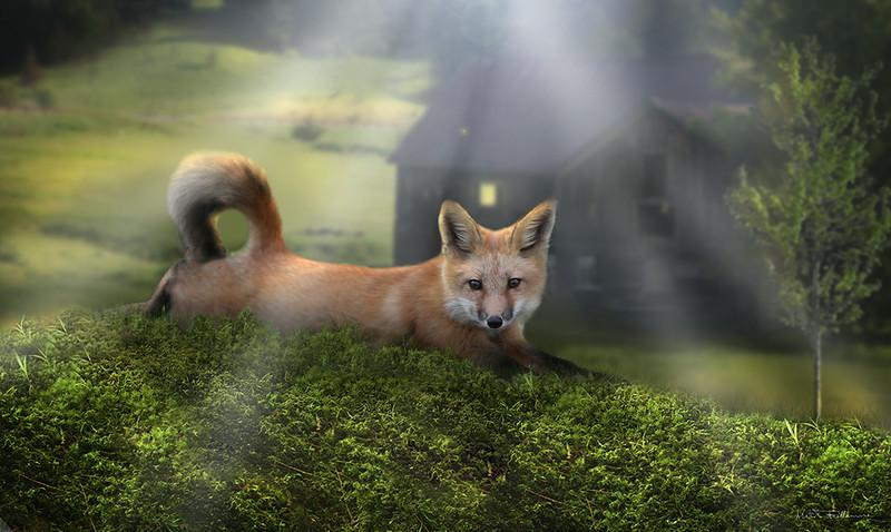 laying-fox2.jpg