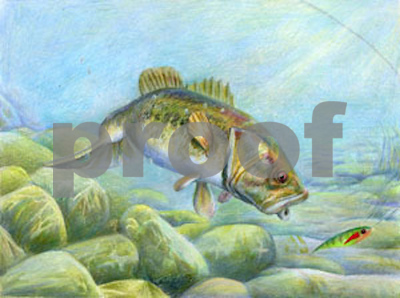 texas-statefish-art-contest-winners-announced