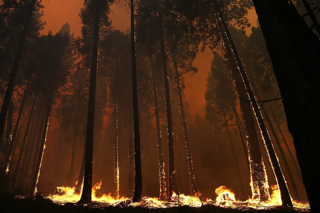 . BUCK MEADOWS, CA - AUGUST 21:  Fire consumes trees along US highway 120 as the Rim Fire burns out of control on August 21, 2013 in Buck Meadows, California. The Rim Fire continues to burn out of control and threatens 2,500 homes outside of Yosemite National Park. Over 400 firefighters are battling the blaze that is only 5 percent contained.  (Photo by Justin Sullivan/Getty Images)