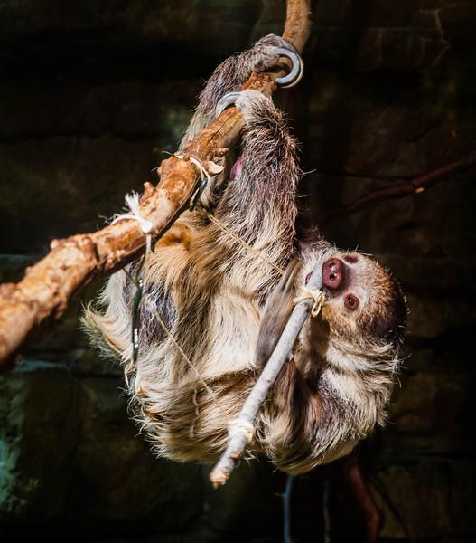 zoo-1559.jpg