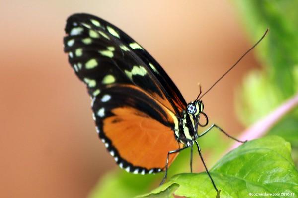 Butterflies & Moths. Set 7
