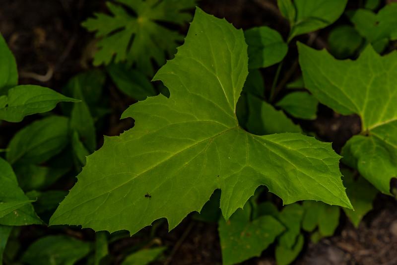 DSC_1680 Lettuce Family  PS- LL NEF.jpg
