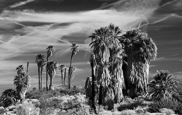 Oasis of Mara