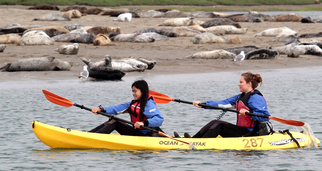 . Young Women in Science kayakers paddle past harbor seals lazing on the shore in Elkhorn Slough.