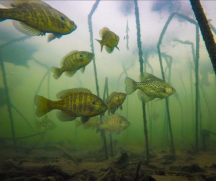 fish 2 web.jpg