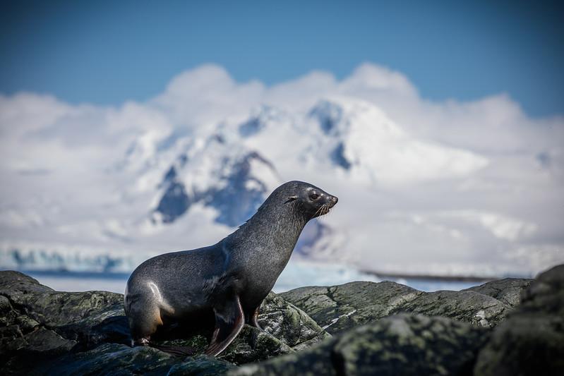 _MG_4680_20170119_Antarctica.jpg