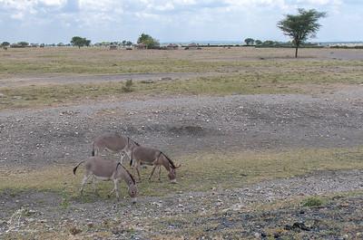 Donkey, Masai