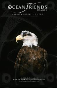 Eagle Prints