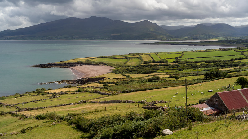 View of sheep's grazing on pasture of Irish sea from Brandon Point, Murirrigane, Brandon, County Kerry, Ireland