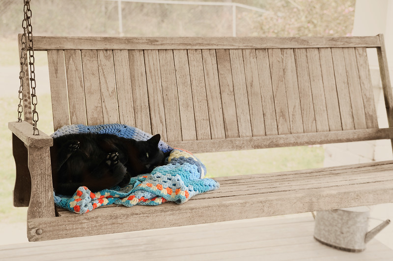 Today felt more spring-like than many this past month.  Bobb stayed curled up on the porch swing.