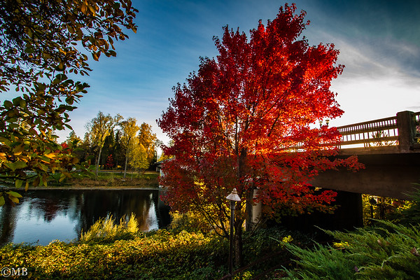 Trip to Oregon October 2018