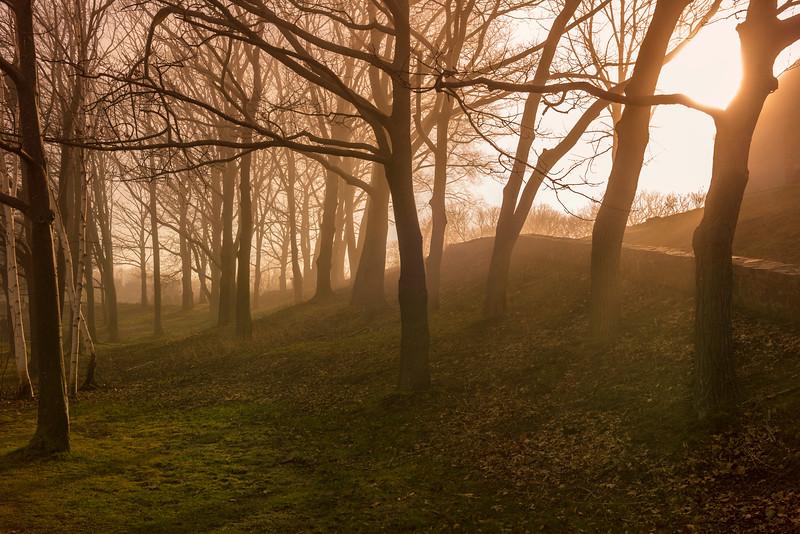 Tree Fog at Fort Williams.jpg