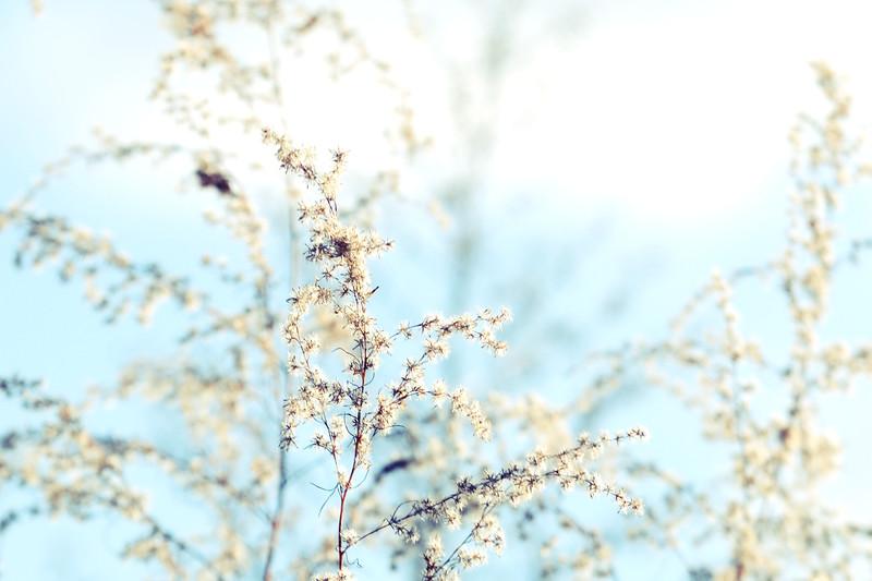 LTD_2012-12-02_0704_2