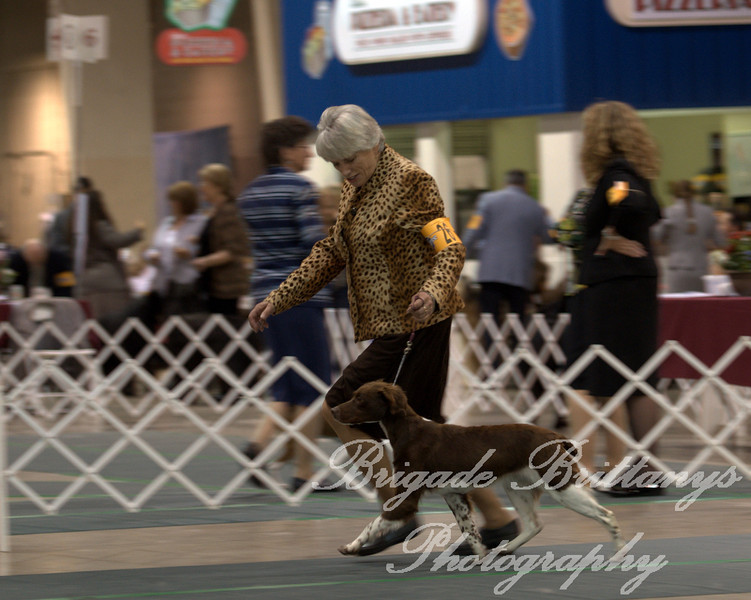 26 FINALE'S FLYIN' COLORS , SR51504202 8/23/2008. Breeder: Dale and Rosalie Shores. By Megasmoke Grand Finale -- Midas Blazin Amber Skies. Myra-Dawn Ellis . Bitch. Kathy Grayson