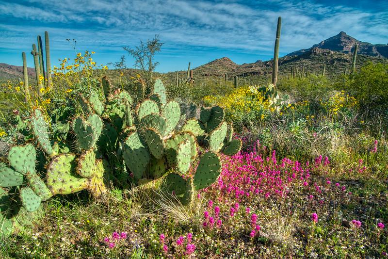 Organ Pipe Cactus 2020-16.jpg