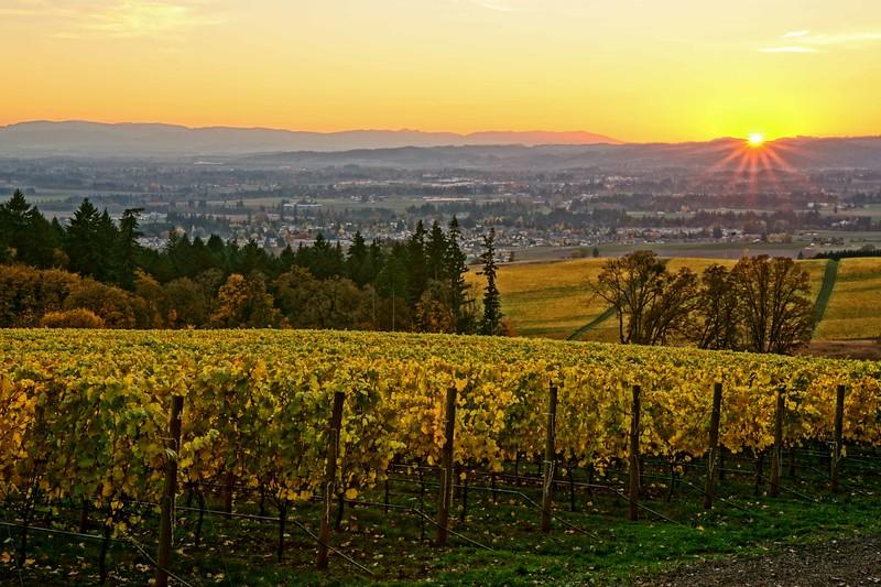 Vista Hills Vineyard sunset