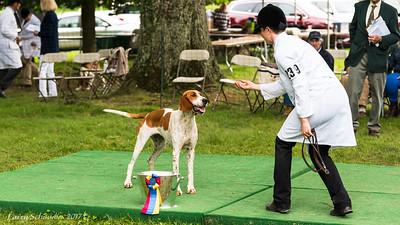 Virginia Foxhound Club Show 2017