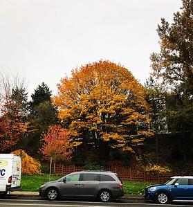 2018-10-31 Fall Colors