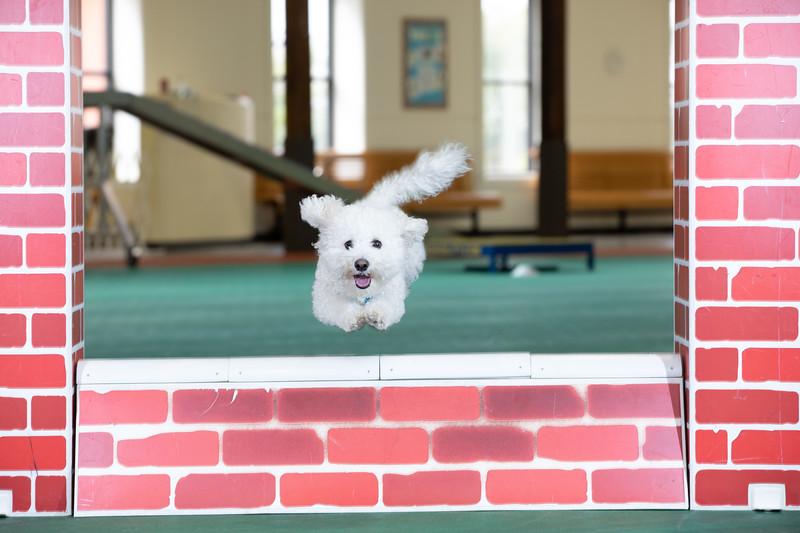 SPCA_Agility-41.jpg