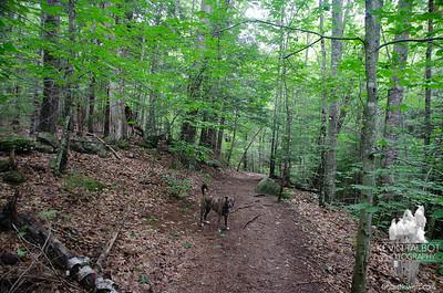 Welch Mountain & Dickey Mountain 7-20-21