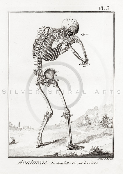 All Vintage Medical Medicine Anatomy and Skeletons