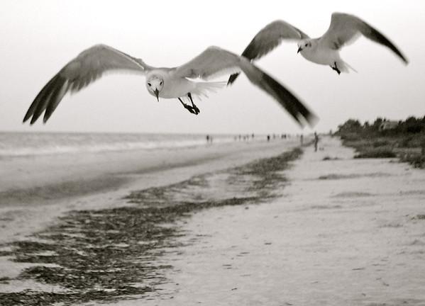 Black and White- Sea Life