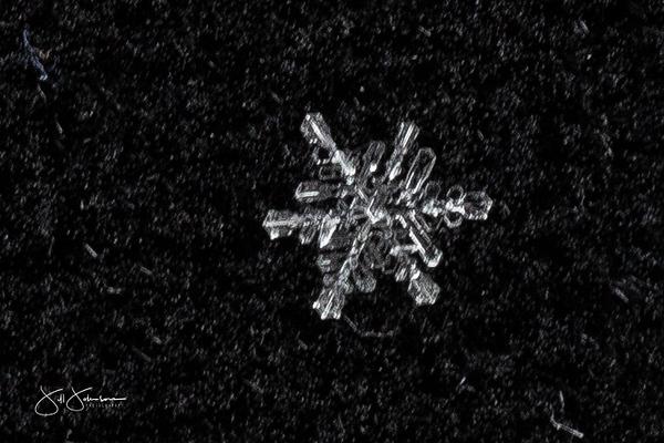 snowflakes-2315.jpg