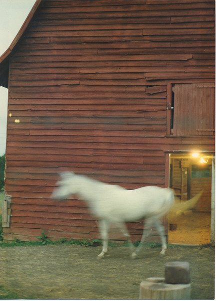 white horse red barn.jpg