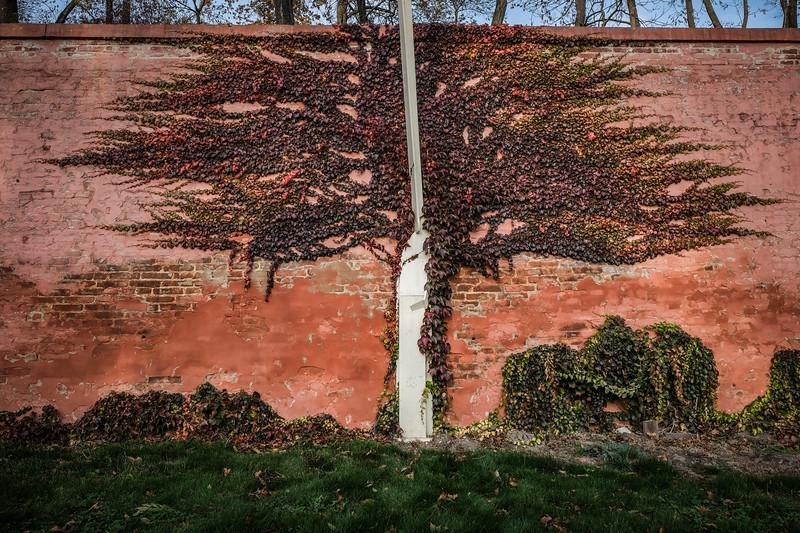 brevnov stromy-005.jpg