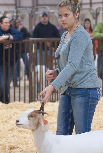 kay_county_showdown_goats_20191207-174.jpg