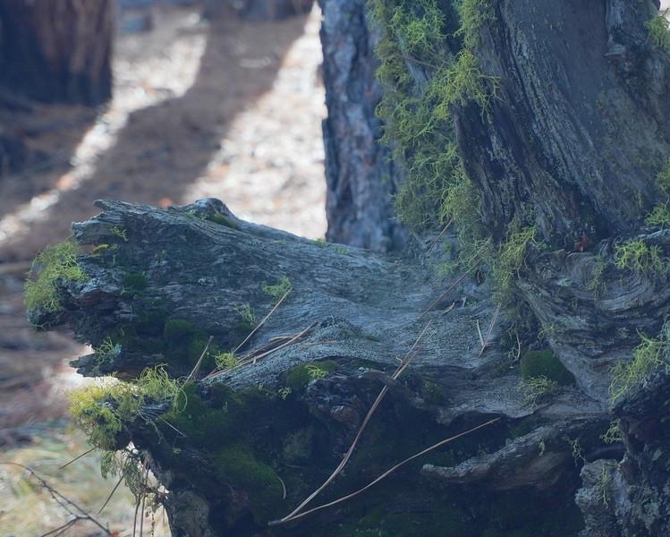 Benham Falls 7.JPG