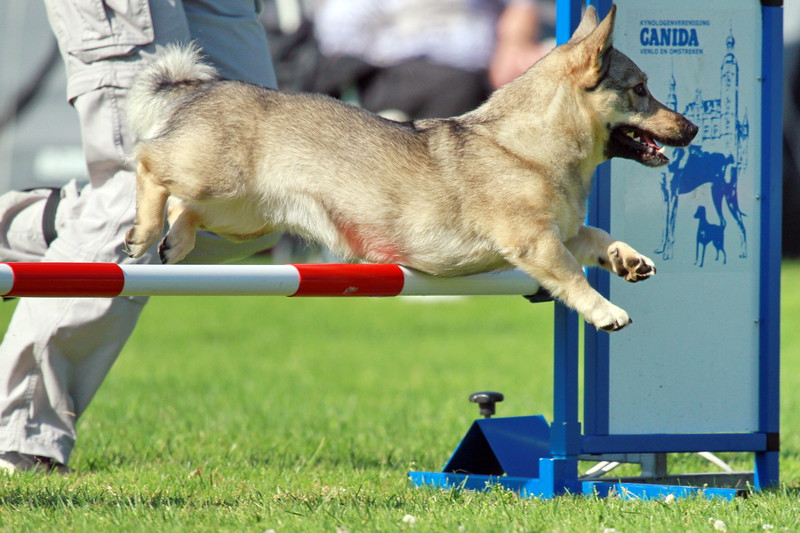 Images from folder 2012_06_30 Agility Venlo Canida