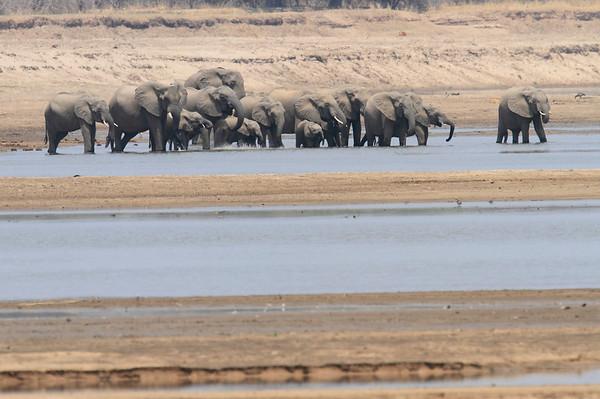 Elephants Kaingo Zambia 2013 and 2017