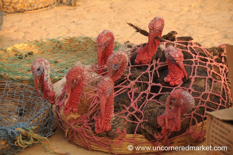Turkeys for Sale at San Francisco El Alto Market - Guatemala